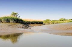 Niedrigwasser im Dwarsloch - Haseldorfer Binnenelbe; das Schilfufer ist weit zurückgetreten.