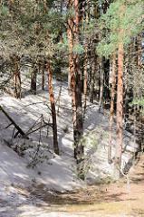 Wanderdüne im Slowinzischen Nationalpark bei Leba, Polen - der Sand hat einen Kiefernwald erreicht, teilweise sind die Baumstämme verschüttet.