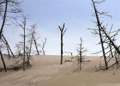 Wanderdüne im Slowinzischen Nationalpark bei Leba, Polen - die Dünen bewegen sich bis zu 10m im Jahr; hier hat eine Sanddüne Bäume verschüttet; sie sind abgestorben - die toten Stämme ragen aus dem Sand.