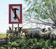 Schild am Schwingeufer ANKERN VERBOTEN - Schafe im Schatten unter einer Weide.