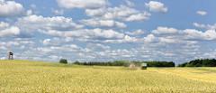 Kornernte auf einem Feld in Altfresenburg / Bad Oldesloe - ein Mähdrescher fährt mit einem Traktor über das Feld - ein Posten sitzt mit roter Warnjacke auf einem Hochsitz und soll vor gefährdeten Wildtieren warnen - blauer Himmel mit weissen Schäfche