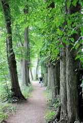 Lindenallee im Stadtpark Glückstadt.