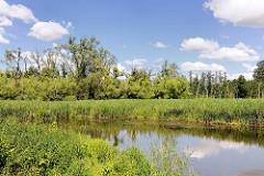 Lauf der Trave in Bad Oldesloe,  Schilf und Bäume am Flussufer.