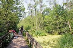 Holzsteg Ahrensburger Tunneltal - Naturschutzgebiet Schleswig Holsten, Stormarn.