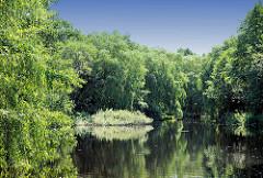 See / Teich beim Hopfenbach in Ahrensburg / Stormarn, Schleswig-Holstein. Hohe Weiden stehen am Wasser, die Zweige hängen ins Wasser.
