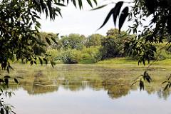 Blick über den Fischteich / Timmerhorner Teich in Ammersbek - das Ufer ist dicht mit Bäumen und Sträuchern bewachsen.