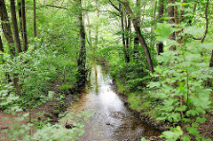 Naturschutzgebiet Neuer Teich in Ahrensburg, Metropolregion Hamburg.