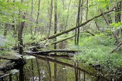 Naturschutzgebiet Neuer Teich in Ahrensburg, Metropolregion Hamburg. Wasserlauf, Baumstämme liegen über dem Wasser.