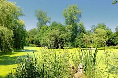 Teich beim Hopfenbach in Ahrensburg / Stormarn mit grünen Algen bedeckt - Weiden stehen am Ufer des kleinen Sees.