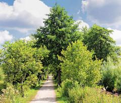 Radweg / Fussweg zwischen Bäumen und Sträuchern entlang der Krückau in Barmstedt, Kreis Pinneberg.