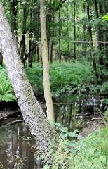 Ufer der Lottbek am Rande vom Heidkoppelmoor in Hoisbüttel / Ammersbek.
