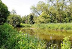 Lauf der Trave in Bad Oldesloe, Schilf und Baume am Flussufer.