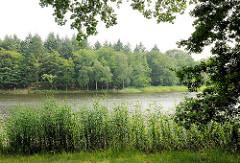 Bredenbeker Teich - Ahrensburg, Metropolregion Hamburg. Schilf und Bäume stehen am Ufer des Sees.
