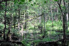 Naturschutzgebiet Neuer Teich in Ahrensburg, Metropolregion Hamburg. Bäume / Erlen stehen im Wasser - dichtes Gebüsch und Sträucher.