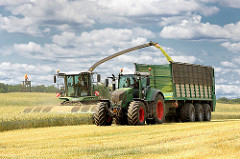 Kornernte in Altfresenburg - Bad Oldesloe; der Mähdrescher fährt durch das Kornfeld; die Erntemaschine mäht und drischt das Korn, dann wird die Ernte direkt auf den daneben fahrenden Traktoranhänger abgetankt.
