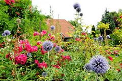 Bunter Bauerngarten - blühende Blumen im Vorgarten an der Dorfstrasse im Ortsteil Bünningstedt - Gemeinde Ammersbek.