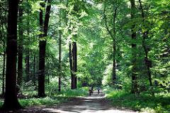 Rantzauer Forst bei Barmstedt - Fahrradfahrer am dem Waldweg zwischen hohen Bäumen, grünes Laub - Sonnenschein.