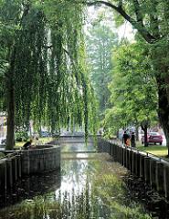 Am Fleth in Glückstadt Unterelbe - Spaziergänger am Wasser - Weide mit herabhängenden Zweigen.