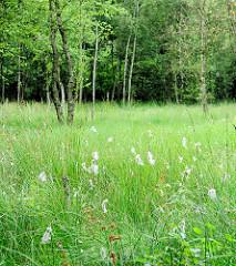 Naturschutzgebiet Heidkoppelmoor und Umgebung  - 62 Hektar grosses Zwischenmoor - artenreiches Feuchtgrünland.