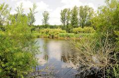 Naturschutzgebiet Brenner Moor in Bad Oldesloe / Kreis Stormarn. Flachmoor imTalraum der Trave mit den größten binnenländischen Salsquellen Schleswig Holsteins. -