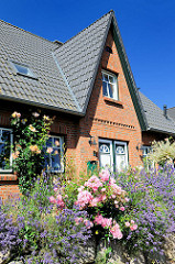 Neubaugebiet Eichholzkoppel - Gemeinde Tangstedt / Stormarn - blühender Lavendel und Rosen.