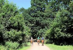 Ausritt von drei ReiterInnen auf einem staubigen Feldweg in der Gemeinde Tangstedt / Stormarn - hohe Bäume und Büsche am Wegesrand.