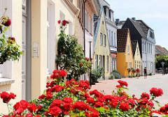 Wohnhäuser mit Rosenstock am Eingang - blühende Rosen; Marktstrasse in Schleswig.