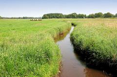 Lauf der Alster, Bach zwischen Wiesen in der Gemeinde Tangstedt, Kreis Stormarn - Naherholungsgebiet Oberalster.
