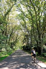 Schmale Asphaltstrasse mit hohen Eichenbäumen, Eichenallee - Rennradfahrer; Bilder aus der Gemeinde Tangstedt / Kreis Stormarn.