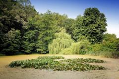 Teich mit Algen bedeckt - Seerosenblätter; Bäume und Sträucher am Ufer - Bilder aus der Gemeinde Tangstedt; Kreis Stormarn / Schleswig Holstein.