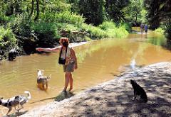 Hunde spielen bei warmen Sommerwetter in der Alster - Naherholungsgebiet Oberalster, Gemeinde Tangstedt (Stormarn).