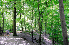 Buchenwald am Lauf der Alster - Bilder aus der Gemeide Tangstedt.