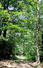 Spazierweg mit hohen Laubbäumen entlang der Alster / Alsterwanderweg bei Wulksfelde, Gemeinde Tangstedt.