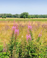 Weite Wiesen, blühende Blumen - Naturschutzgebiet Oberalsterniederung, Gemeinde Tangstedt - Kreis Stormarn.