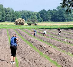 Pflege eines Spargelfeldes nach der Ernte - Arbeitskräfte lockern die Erde. Bilder aus Wilstedt, Gemeinde Tangstedt.