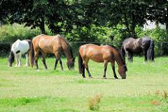 Pferdekoppel, Wiese mit grasenden Pferden in Gemeinde Tangstedt - Kreis Stormarn.