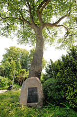 Gedenkstein an einer Eiche in Wakendorf II - Inschrift Kaiser Wilhelm dem Grossen zu seinem 100jährigen Geburtstage 22. März 1897.