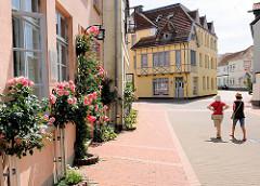 Wohnhäuser - historische Gebäude, Architektur mit farbiger Fassade, blühende Rosen, Rosenstöcke an der Strasse - Königstrasse in Schleswig.