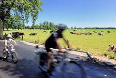 Radfahrer mit Kind auf einem Kinderrad bei einer Radtour durch das Naherholungsgebiet Oberalster, Gemeinde Tangstedt - Kühe liegen in der Sonne auf einer Weide.