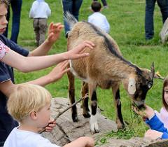 Streichelzoo auf dem Wulksfelder Bauernmarkt - eine Ziege lässt sich geduldig von den Kindern füttern und streicheln.