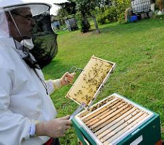 Imker mit Schutzkleidung /  Imkerbluse mit Hut und Schleier - Überprüfung von Honigwaben.