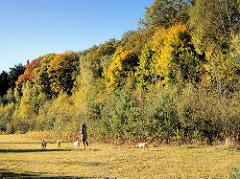 Herbstbäume - Wiese in der Herbstsonne, Spaziergängerin mit Hunden im Tangstedter Forst.