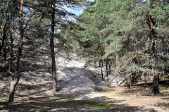 Ende einer Wanderdüne - teilweise sind schon die Baumstämme eines Kieferwäldchens vom Sand verschüttet - Fotos aus dem Slowinzischen Nationalpark bei Leba, Polen.