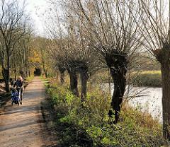 Wanderweg an der Trave - Kopfweiden am Fluss in Bad Segeberg.
