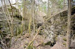 Gesprengter und zusammengesunkener Bunker - mit Moos bewachsene Betonwände; Wolfsschanze  /  Wilczy Szaniec. Bäume und Sträucher wachsen aus den Trümmern der Vergangenheit.