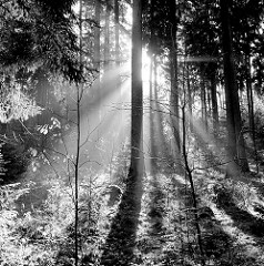 Gegenlichtaufnahme im Tangstedter Forst.