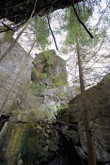 Gesprengter Bunker - mit Moos bewachsene Betonwände; Wolfsschanze  /  Wilczy Szaniec. Bäume und Sträucher wachsen aus den Trümmern der Vergangenheit.
