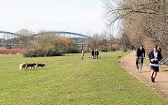 Hundetummelplatz, Hundefreilaufzone im Elbpark Entenwerder; Hunde spielen auf der Wiese - Jogger u. Radfahrer; im Hintergrund die Norderelbbrücken.