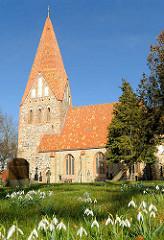 Dorfkirche Lichtenhagen, Landkreis Rostock; die zum Großteil aus  unbehauenen Findlingen errichtete Kirche stammt aus der Zeit des Übergangs von der Romanik zur Gotik. Blühende Schneeglöckchen auf der Wiese.