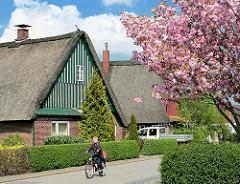 Rosa blühende japanische Zierkirsche - Bauernhaus mit Reetdach.